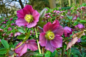 Using Perennials in the Landscape